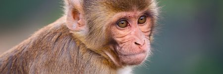 Male Contraceptive Gel Passes Clinical Trials in Monkeys